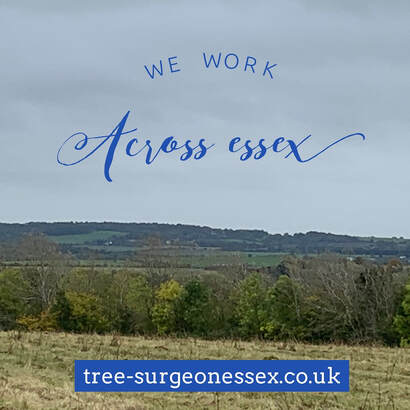landscape of essex countryside_tree surgeon basildon