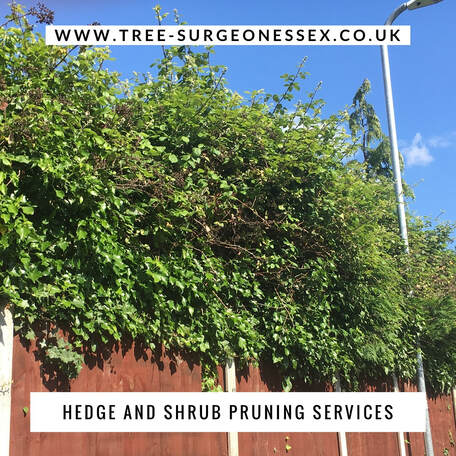 redbridge tree surgeons offer a hedge and shrub service across the borough