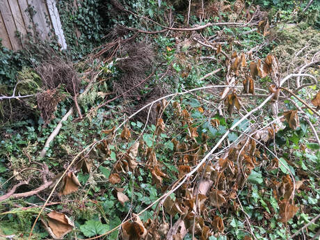Tree surgeon Navestock_waste removed by Essex