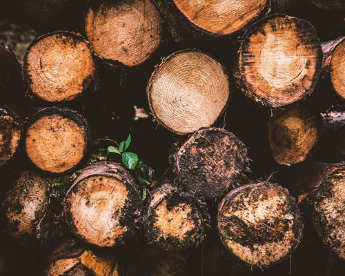 Photo of a series of logs in a pile. Tree Cutting Service_Tree Surgeons Essex