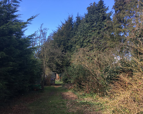 Overgrown garden in need of pruning. Tree Pruning Service