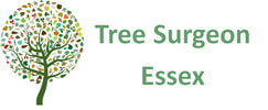 Tree Surgeon Essex