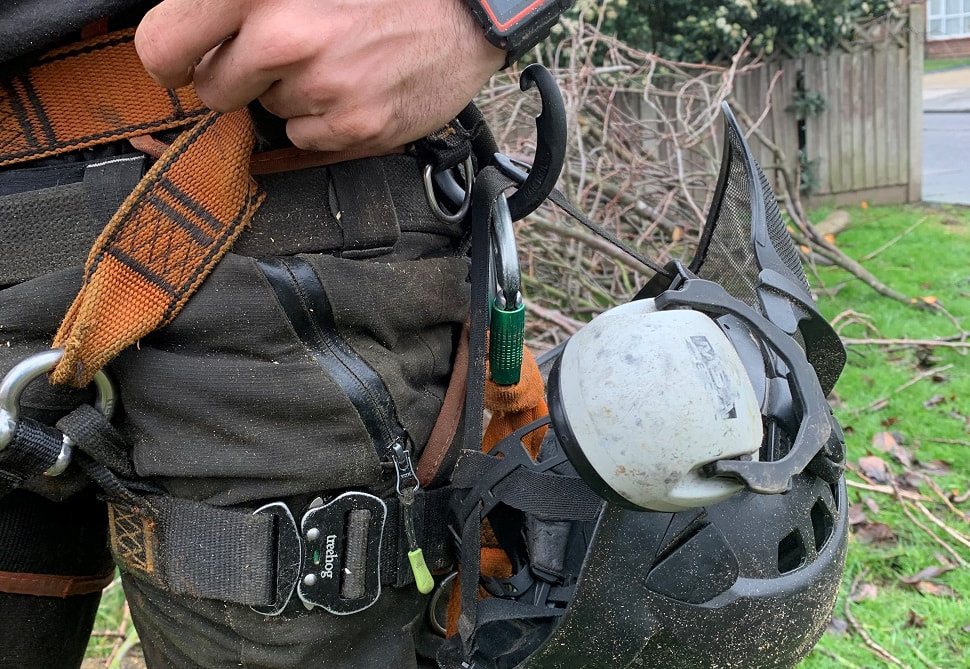 What does a tree surgeon do blog image_romford tree surgeon